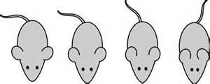 mouse paint template lab mouse template clip vector clip