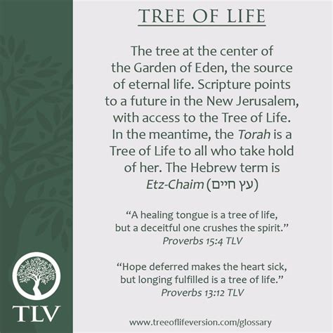 tree meaning 25 best ideas about tree of meaning on