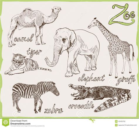 sketchbook of a zoo animals from the zoo stock vector image of feline kenya