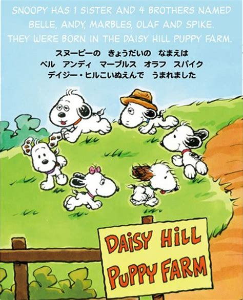 hill puppy farm daisies farms and puppys on