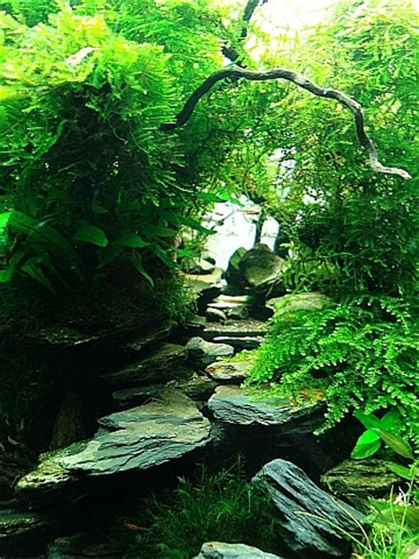 tropical aquascape manage your freshwater aquarium tropical fishes and