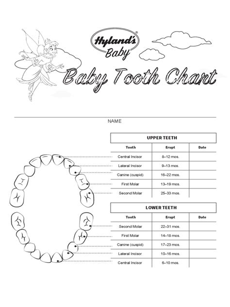 teeth chart template baby teeth chart 4 free templates in pdf word excel