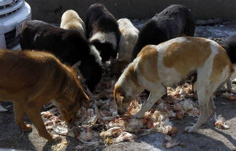 dogs india stray killing jose maveli 3 others arrested in kerala