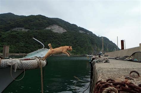 cat island so there s an island where many cats roam freely and it s