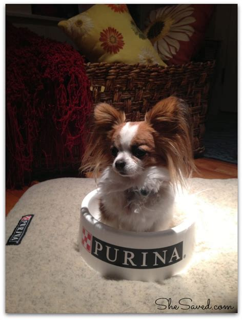 Veterinary Giveaways - dogproblems purina veterinary diets pet food allergy education giveaway shesaved 174