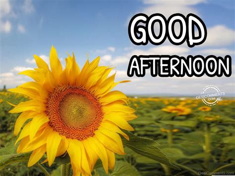 a day afternoon afternoon pictures images graphics for whatsapp page 6