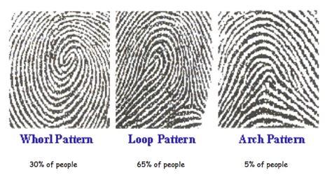 pattern types of fingerprints fingerprint detectives harrison primary school