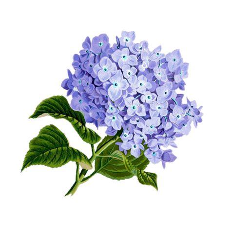 free illustration flower purple plan free image on