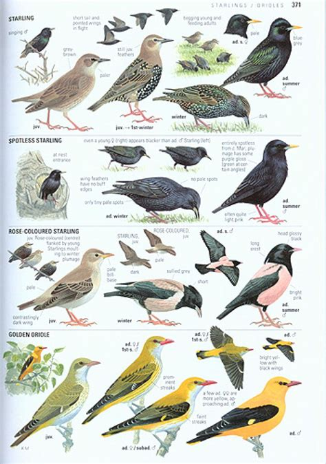 collins bird guide the most complete guide to the birds