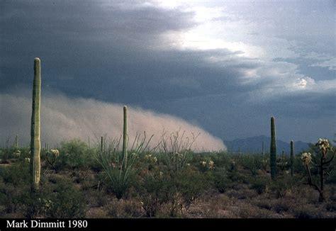 lattes desert monsoon books sonoran desert dust at organ pipe