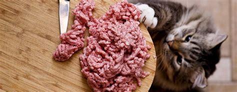 alimentazione naturale gatto la dieta barf per gatti alimentazione naturale per gatti