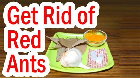 how t get rid of red in salt amd pepper hair how to get rid of red ants at home youtube