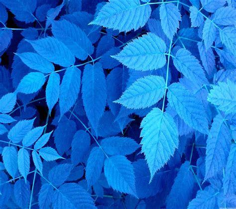 wallpaper blue leaves 自然葉青 wallpaper sc スマホ壁紙
