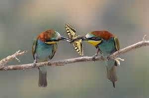 wild tropics the tropical nature and biodiversity blog