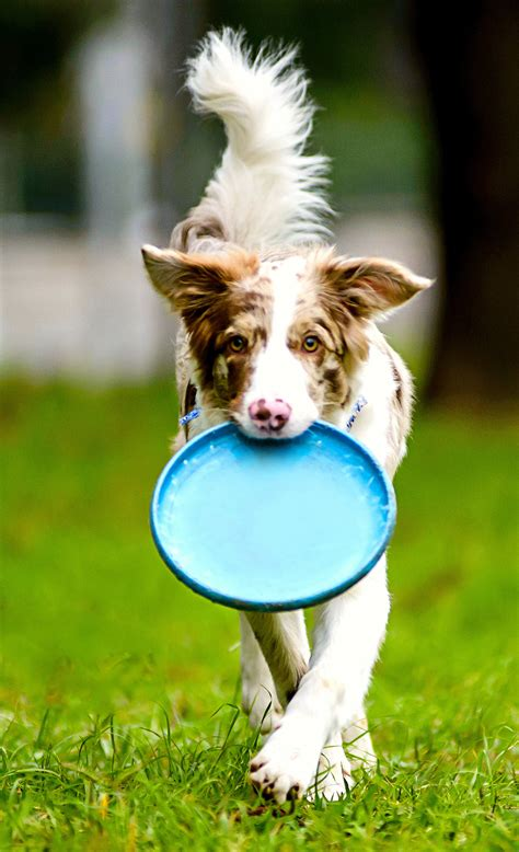 best frisbee what is the best frisbee for active loving dogs