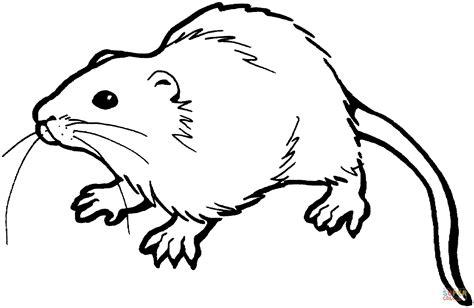 Galerry rat cartoon coloring