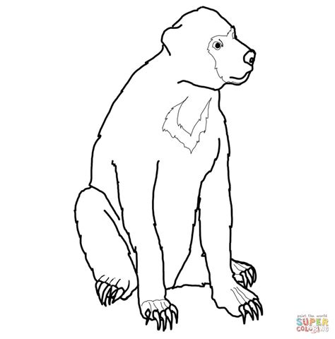 sun bear coloring pages malayan sun bear coloring page free printable coloring pages