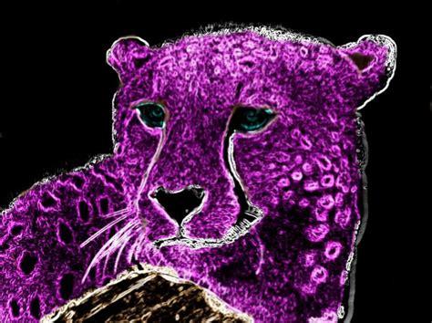 S931 Pink by Purple Neon Cheetah Purple 2