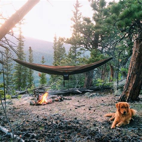 Golden Hammocks 51 best images about adorable dogs in backpacks on hiking backpack doggies and bags