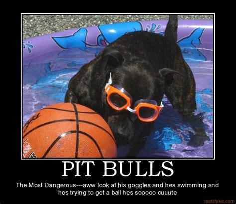 Bulls Memes - pit bull meme bull breed forum