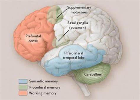 Moment Memory Brain consciousness with hardly a brain the digestible brain