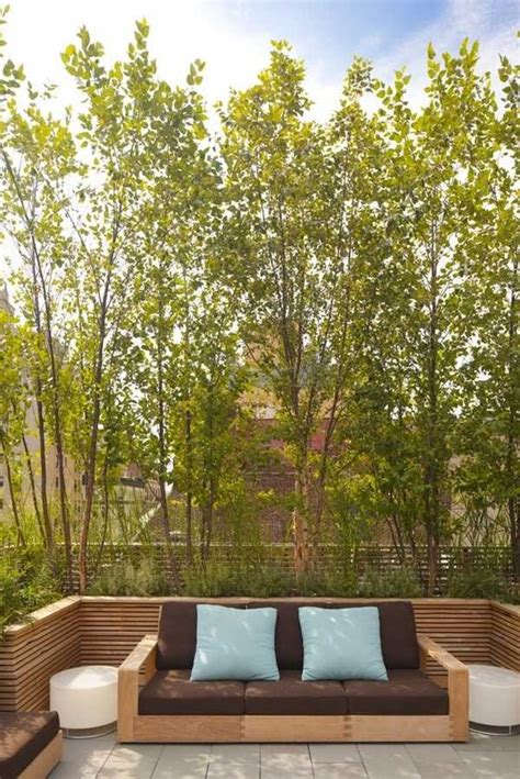 best trees for backyard privacy modern privacy screens trees patio landscape ideas outdoor