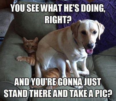 Bassett Flowers - funny dog pictures photos and images for facebook