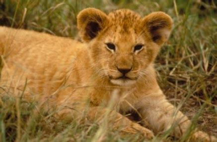 baby animals animal facts encyclopedia
