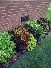 25 best border plants ideas on pinterest driveway