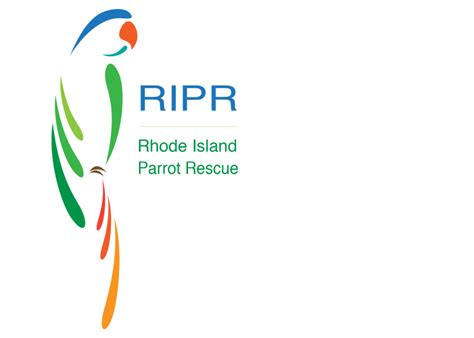 adoption island r29 rhode island parrot rescue supporting rescues