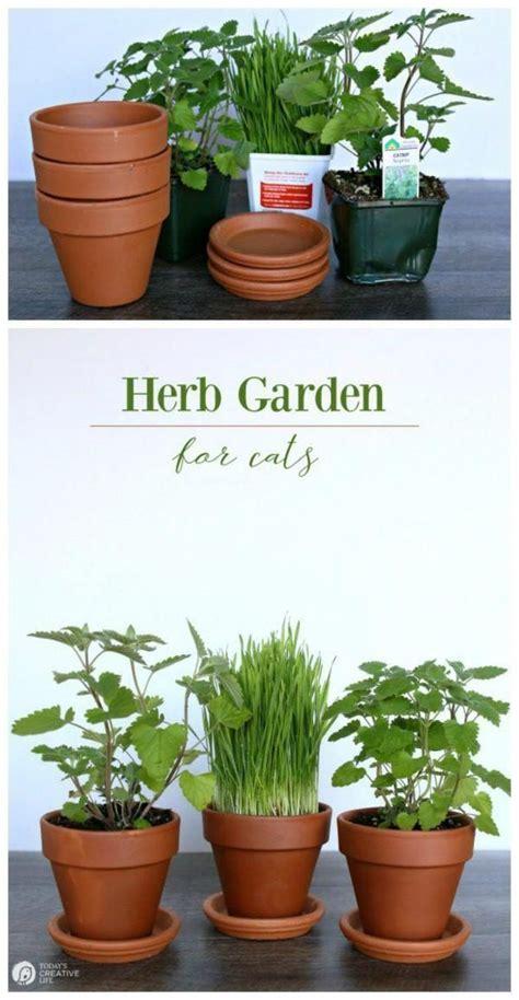 herb garden  cats bring