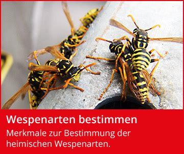 Mittel Gegen Wespen Im Dach by Wespen Was Hilft Gegen Wespen Wespenfeuerwehr