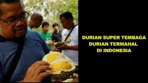durian super tembaga durian termahal  indonesia youtube
