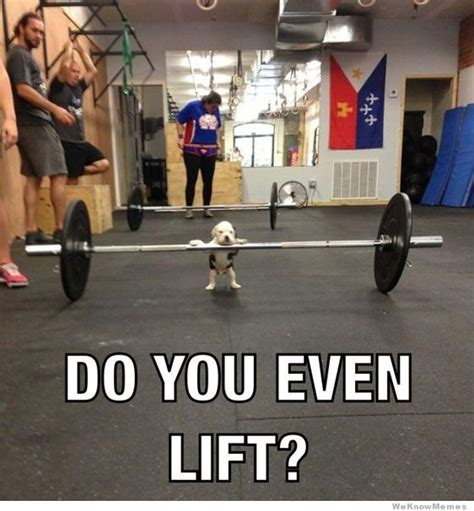 Do You Even Lift Meme - do you even lift puppy meme collection