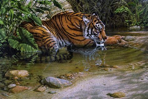 imagenes de animales jungla tigre jungla animales pintura agua selva wallpaper