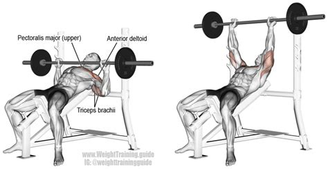 incline bench press dumbbells incline barbell bench press instructions and video weight training guide