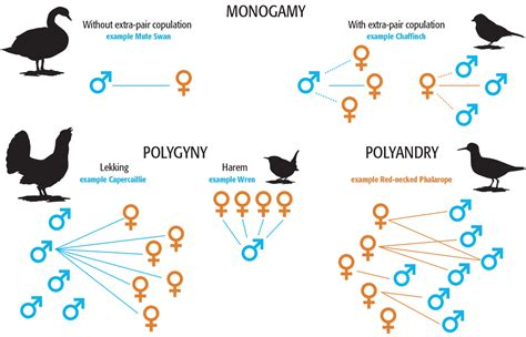 mating systems in birds visualoop
