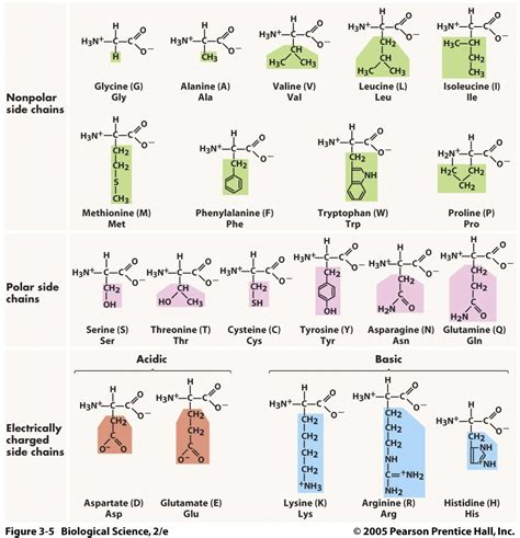 s properties amino acids