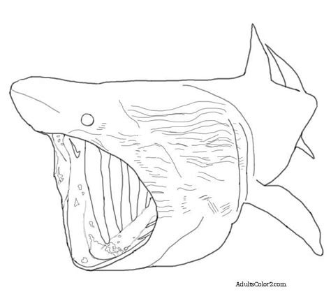 whale shark coloring page free whale shark only coloring pages