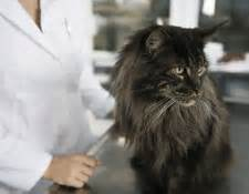 kidney failure when to euthanize chronic kidney disease in cats