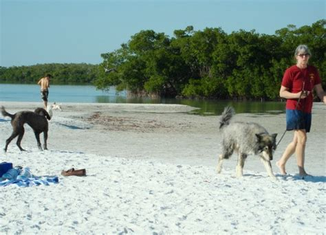 florida beaches that allow dogs pet friendly bonita fl naples florida real estate steps to the