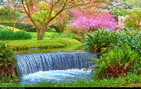 giardino delle ninfe roma rome in bloom