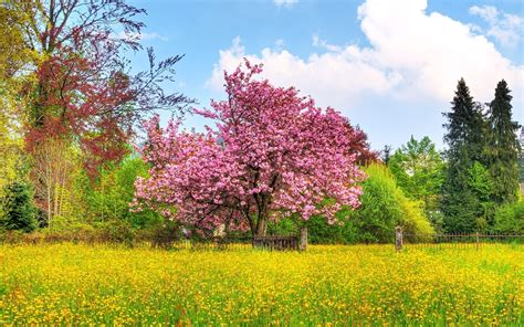 pretty trees pink spring tree yellow flower wallpapers pink spring