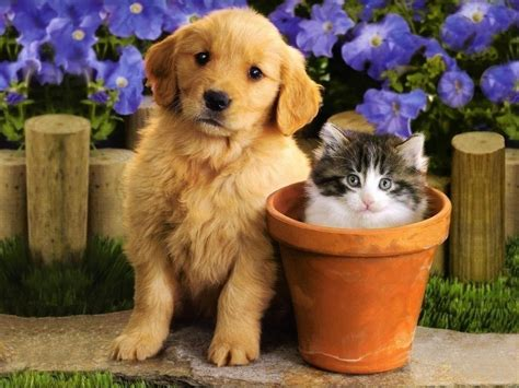 puppys and kittens kittens puppies teddybear64 wallpaper 16751401 fanpop