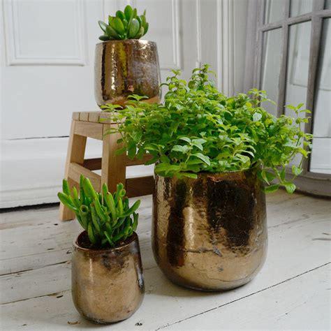 buy divine gold indoor plant pots  worm  turned