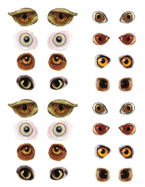 printable animal eyes animal eyes printables pinterest