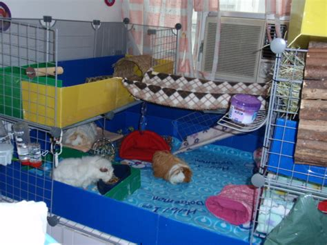 best guinea pig bedding guinea pig bedding alternatives classy the alternative