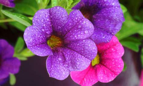 fiori sterlizie sterlizie fiori 28 images fiori all uncinetto crochet