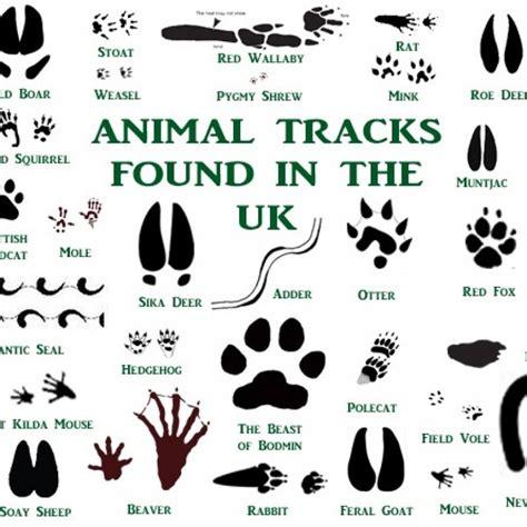 printable animal track cards uk animal tracks card