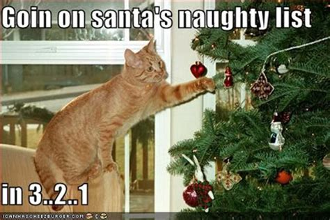 Cat Christmas Tree Meme - happier than a pig in mud lol cats and christmas trees